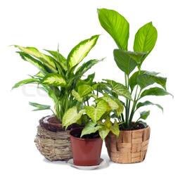 house . plant
